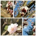 Tavaszi szél vizet áraszt...